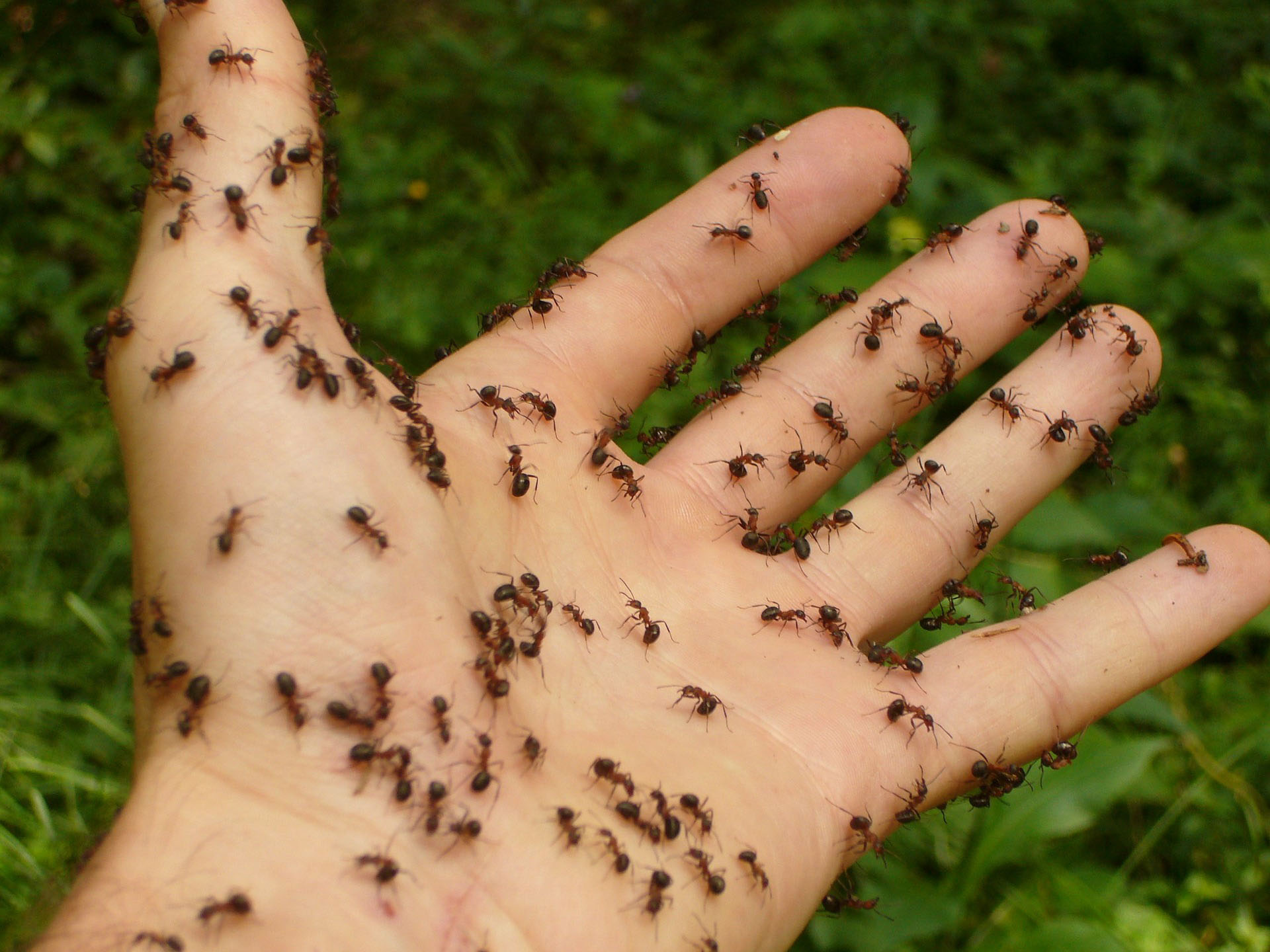 Why you suddenly have ants in your home